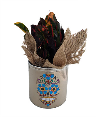 "Day of the Dead Planter + Live Croton Plant - 4.5"" x 4.5"" - Blue Flower"