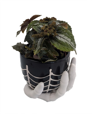 """Haunted Hand Planter with Live Friendship Pilea Plant & Spanish Moss -4""""x4"""""""