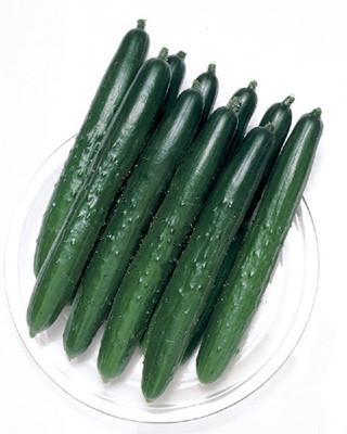 Summer Top Burpless Cucumber - 10 Seeds