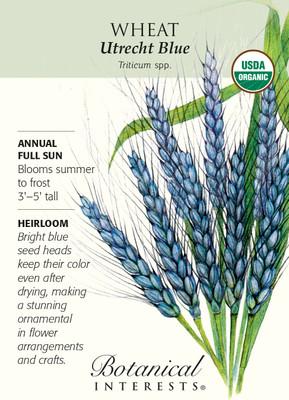 Organic Utrecht Blue Wheat Heirloom Seeds - 5 Grams