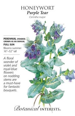 Purple Tear Honeywort Seeds - 2 Grams