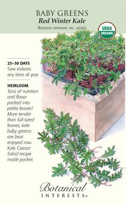 Organic Red Winter Kale Baby Greens Seeds - 6 grams