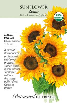 Organic Zohar Sunflower Seeds - 20 Seeds