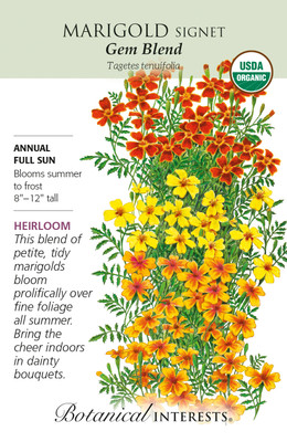 Organic Gem Blend Signet Marigold Seeds - 100 Mg