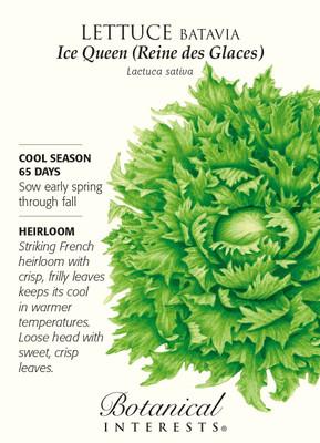 Ice Queen (Reine des Glaces) Batavia Lettuce Seeds - 1 gram