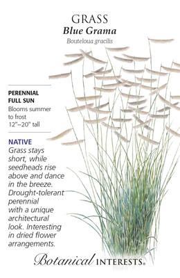 Heirloom Blue Grama Grass Seeds - 1 Gram