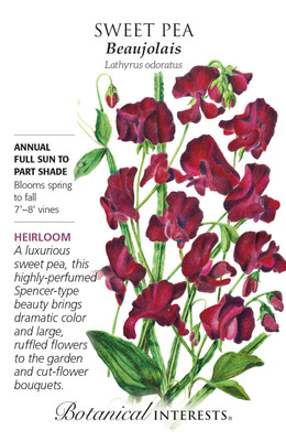 Beaujolais Sweet Pea Seeds - 3 Grams