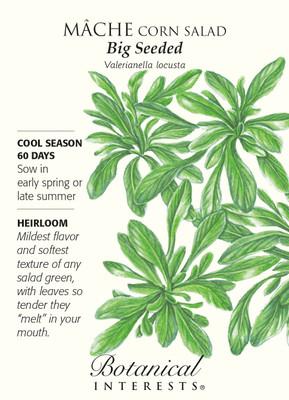 Big Seeded Corn Salad Mache Seeds - 1.5 grams