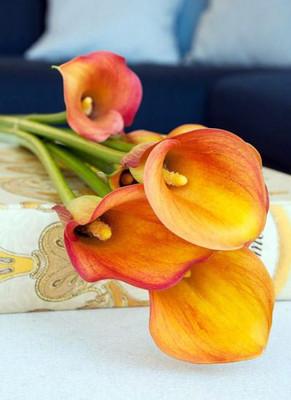 Havana Calla Lily Bulb 14/16cm - Deep Yellow to Vivid Burnt Orange