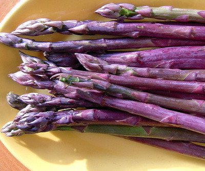 Purple Passion Asparagus 10 Roots - Passion in the Garden - Heirloom/No GMOs