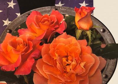Rosie The Riveter® Floribunda Rose Bush - Bareroot
