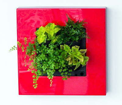 """Living Picture - Red - Self Watering - 20.3""""x20.3""""x4.4"""" - Free Shipping"""