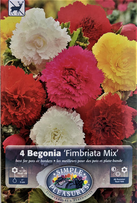 Fringed Begonia Mixed Colors - 5 Bulbs - Begonia fimbriata 6/+cm