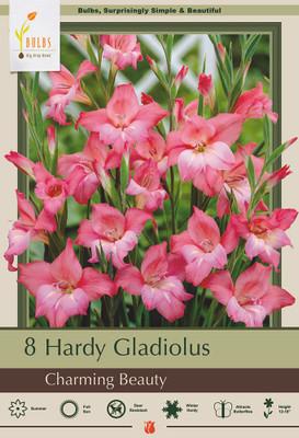 Hardy Gladiolus - Charming Beauty - Nanus tubergenii - 8 Bulbs 10/+ cm