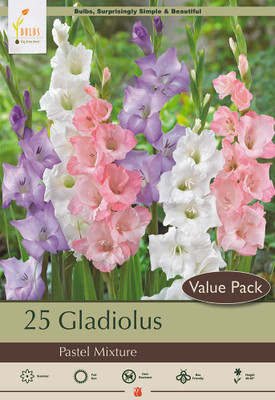 Giant Large Flowering Pastel Mixed Gladiolus -  Gorgeous! - 25 Bulbs