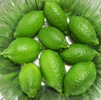 "Finger Caviar Lime Tree - 5"" Pot - Inside/Out -NO SHIP to TX,FL,AZ,CA,LA,HI"