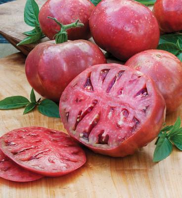 "Heirloom Cherokee Purple Tomato Plant - 2.5"" Pot - Great Taste & Yields"