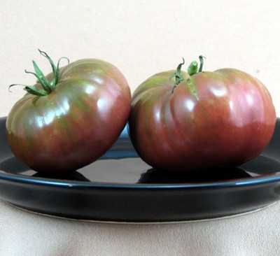 "Black Brandywine Tomato - Heirloom - Great Flavor - 2.5"" Pot"