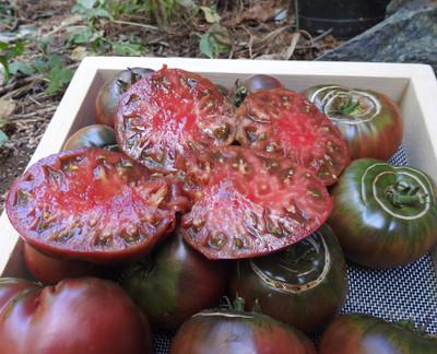 "Black Krim Tomato Plant - 2.5"" Pot - Delicate Skin/Full Flavor - Heirloom"