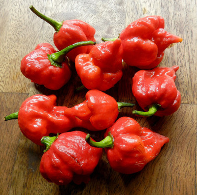 "Trinidad Scorpion Chile Pepper Plant-Straignt From the Depths of Hell- 2.5"" Pot"