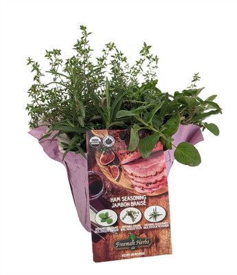 "Organic Herb Combo - Ham Seasoning - 3 Plants in One - 6"" Pot"