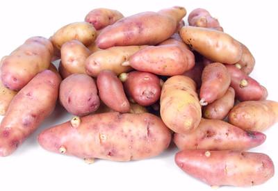 French Fingerling Potato 3 Tubers - Heirloom
