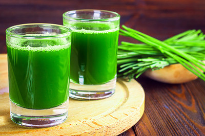 """Wheatgrass Plant - Nutrient-Rich Edible Grass - 3"""" Pot - Live Plant"""