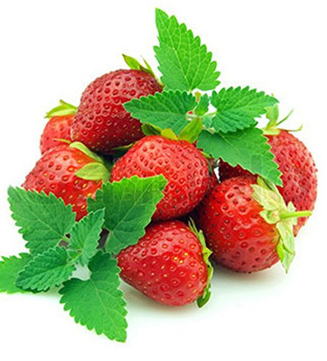 "Strawberry Mint - Grow Indoors or Out - Live Plant - 3"" Pot"