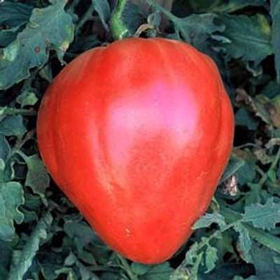 Oxheart Tomato - 20 Seeds