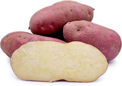Red Japanese Sweet Potato Slips - Ipomoea batatas - 2 Slips