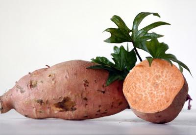 Ginseng Sweet Potato Slips - Ipomoea batatas - 2 Slips