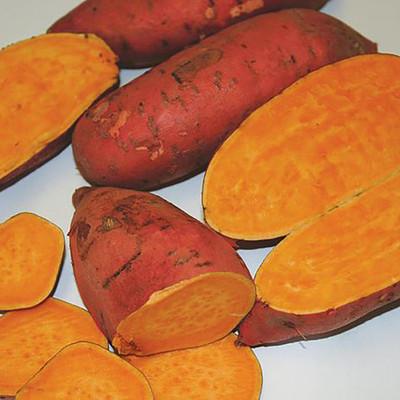 Carolina Ruby Sweet Potato Slips - Ipomoea batatas - 2 Slips