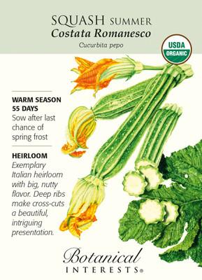 Organic Summer Squash Costata Romanesco Heirloom Seeds - 1.5 Grams