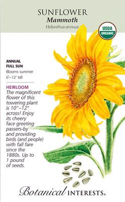 Organic Mammoth Sunflower Seeds - 12 grams - Helianthus annuus - Annual