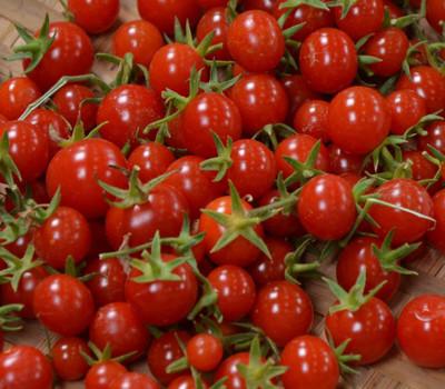 "Sweet Million Cherry Tomato Plant - 4"" Pot - Up to 2000 Cherries"