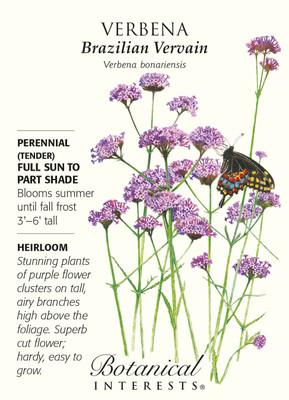Brazilian Vervain Verbena Seeds - 100 Milligrams