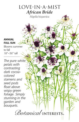 African Bride Love-In-A-Mist Seeds - 250 Mg