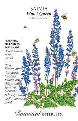Violet Queen Salvia Seeds - 150 Mg