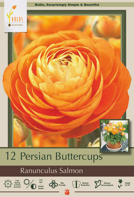 Orange/Salmon Persian Buttercup 10 Bulbs - Ranunculus - 6/7 cm - Hardy