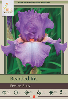 Persian Berry German Bearded Iris - REBLOOMER - 1 Top Size Rhizome