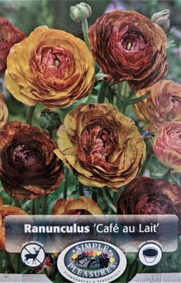 Cafe au Lait Persian Buttercup 10 Bulbs - Ranunculus - 8/+ cm Bulbs