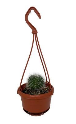 "Barrel Cactus - 4"" Mini Hanging Basket - Easy House Plant"