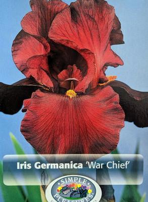 War Chief German Bearded Iris - Top Size Rhizome