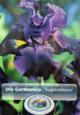 Superstition Black Bearded German Iris - Top Size Root