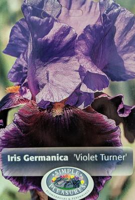 Violet Turner Bearded German Iris - REBLOOMER/FRAGRANT - Top Size Root