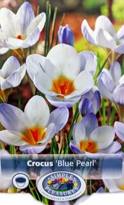 Blue Pearl Snow Crocus 20 Bulbs - Very Hardy! - 5/+ cm Bulbs