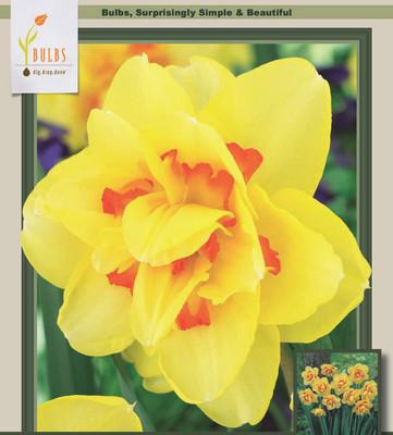 Tahiti Double Daffodil/Narcissus 5 Bulbs - 14/16 cm Bulbs