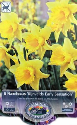 Rijnveld's Early Sensation Trumpet Daffodil 5 Bulbs - 14/16 cm Bulbs