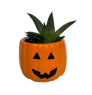 """Salem Smiling Pumpkin Ceramic Planter with Live Succulent Plant - 3"""" x 3"""""""
