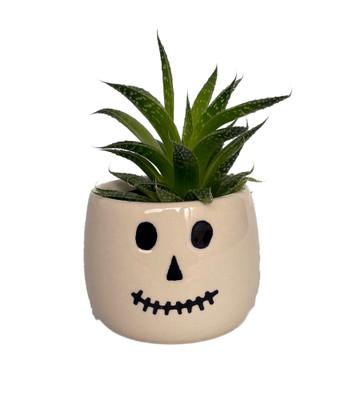 "Salem Skeleton Ceramic Planter with Live Succulent Plant - 3"" x 3"""